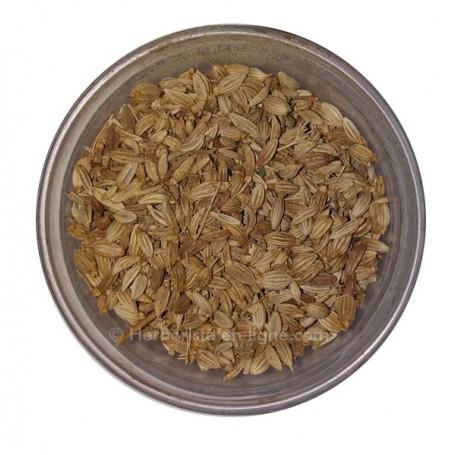 Graine De Fenouil - Besbes - حبة حلاوة - زريعة البسباس