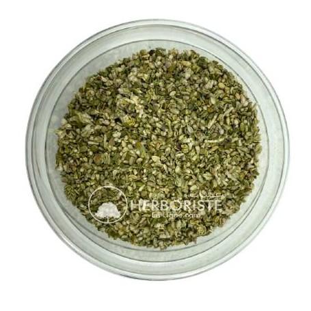 Passerine hérissée - Thymelaea Hirsuta - Ftitich