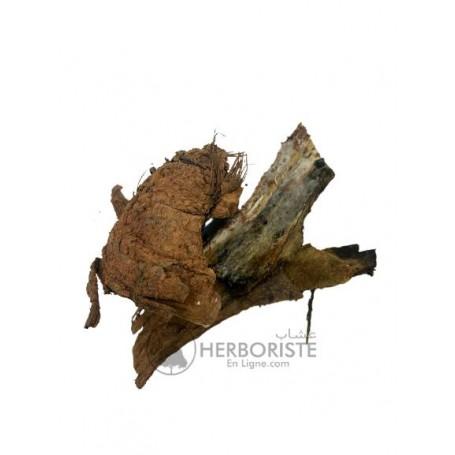Morceaux de branches de l'arbre Ferula communis - Plante Galbanum fassoukh - 40g