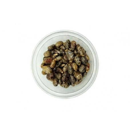 Graine De Ricin - Kharwaa - بذور الخروع