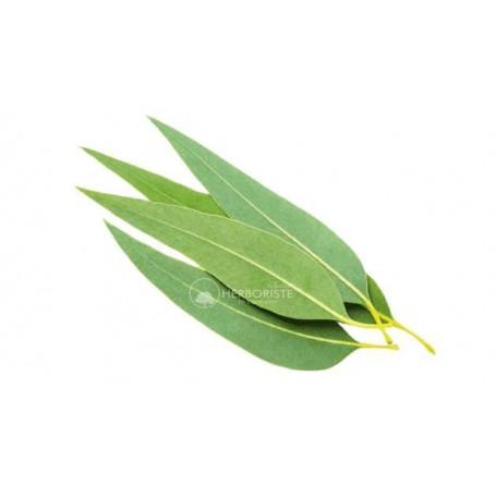 Feuilles d'Eucalyptus - Chajart Alkina - 100g -(أوراق شجرة الكينا (الكاليبتوس