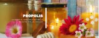 Catégorie Bâtons & cônes de purification - herboriste en ligne : Bâton D'Encens Parfum Ambre  - عود الند برائحة العنبر , Bât...